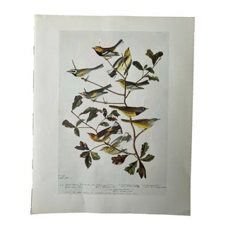Bird Print With Multiple Birds For Sale