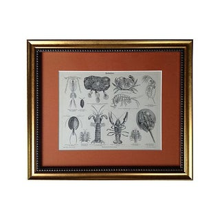 Antique Engraving of Lobsters & Crabs For Sale