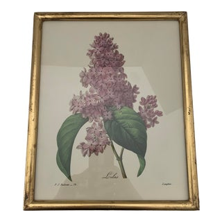 Reproduction Antique Botanical Print Lilac Framed For Sale