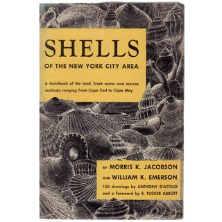"""1961 """"Shells of the New York City Area"""" 150 Drawings"""