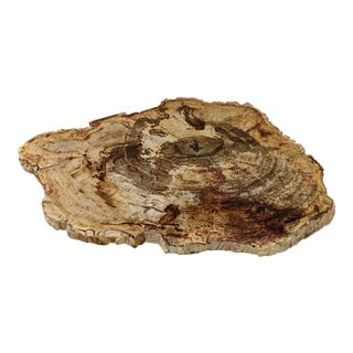 Petrified Wood Tray or Cheese Board For Sale