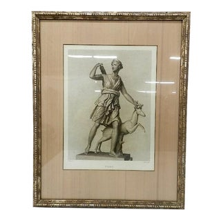 Framed Print of Diane