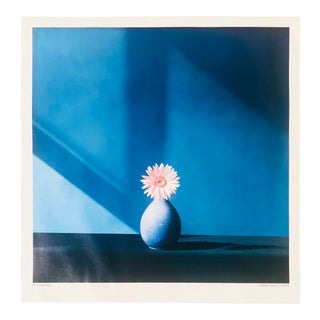 1990s Robert Mapplethorpe African Daisy Offset Lithograph Poster For Sale