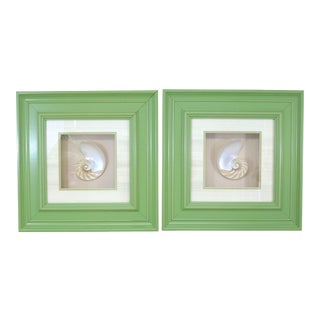 Framed Sliced Nautilus Shell -A Pair For Sale
