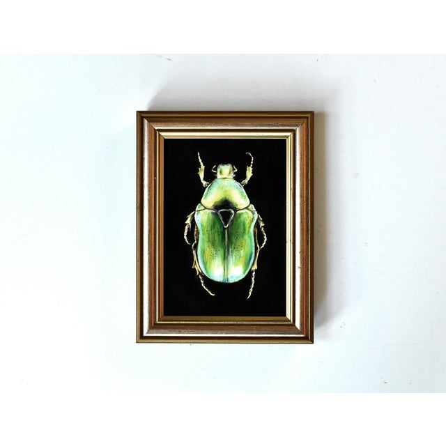 Susannah Carson Contemporary Oil Painting of a Beetle by Susannah Carson For Sale - Image 4 of 7