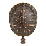 Image of Turtle Shell Lamp Finial For Sale