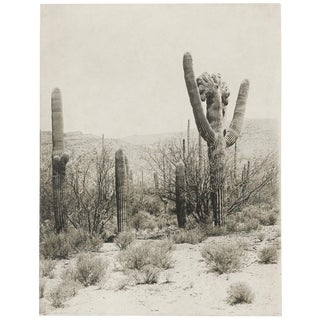 Vintage Cactus Photo #2 - 1900s Tuscon - Vintage Desert Print For Sale
