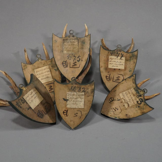 Six Large Antique Deer Trophies on Wooden Carved Plaques Ca. 1860 For Sale - Image 6 of 8