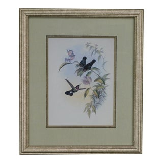 Quality Framed Print of 3 Hummingbirds For Sale