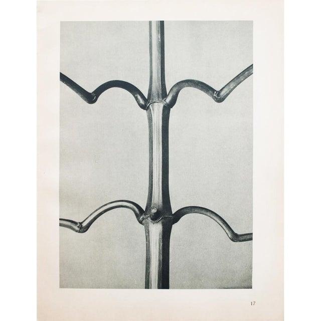 Contemporary 1930s Vintage Karl Blossfeldt Photogravure N17-18 For Sale - Image 3 of 10