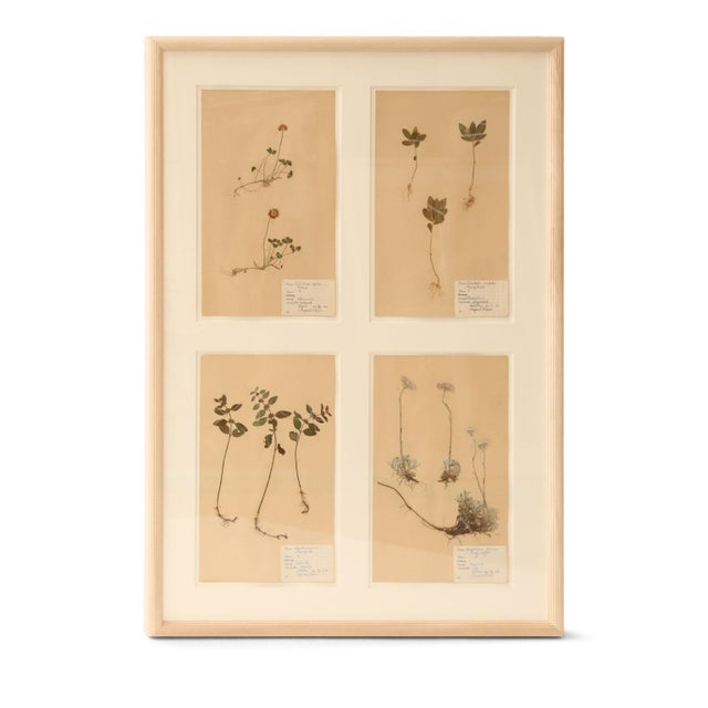 White Framed Set of Four Herbaria For Sale - Image 8 of 13