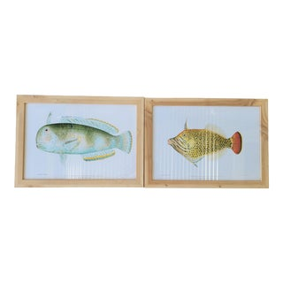 Large William Sonoma Fish Prints - a Pair For Sale