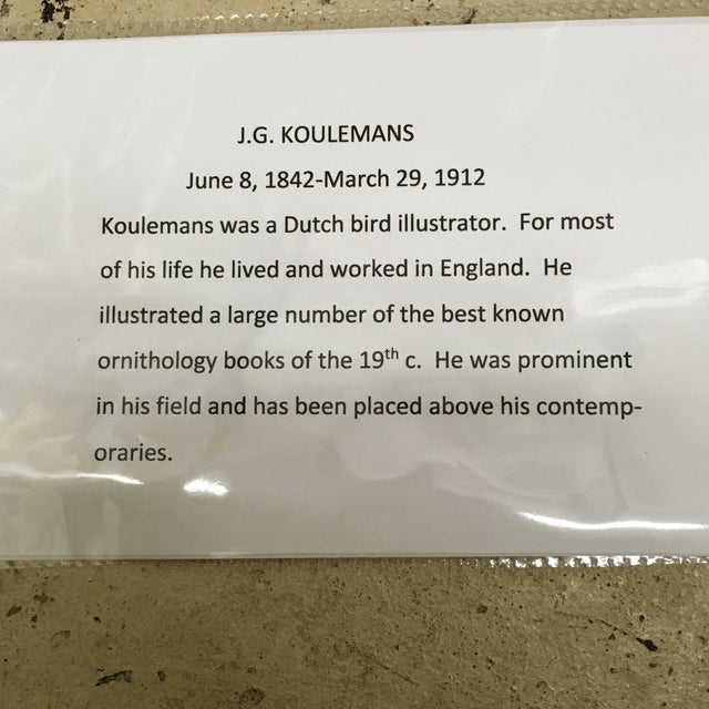 J. G. Koulemans Hand Colored Bird Lithographs - A Pair For Sale - Image 11 of 11