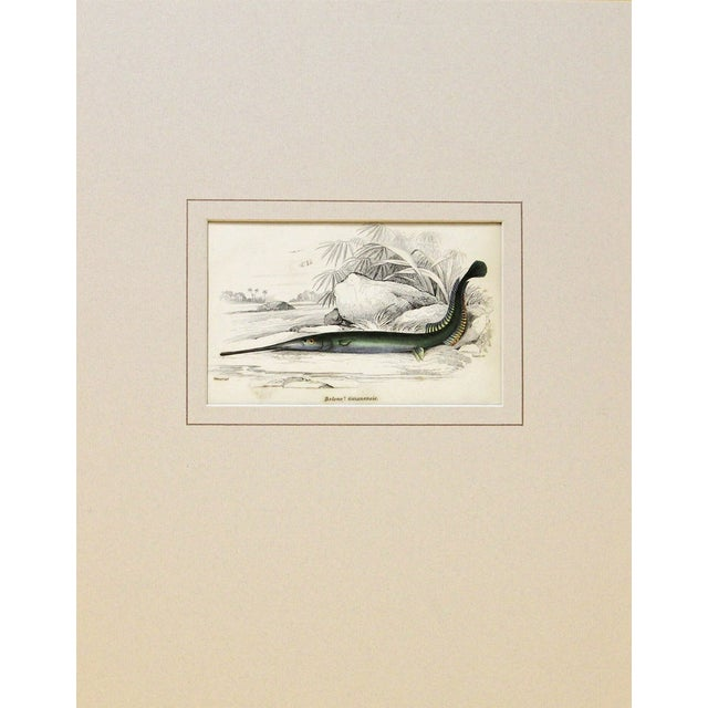 Sir William Jardine Green Fish Engraving For Sale