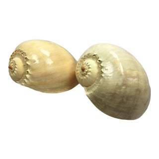 Polished Nautilus Conch Shells - a Pair For Sale