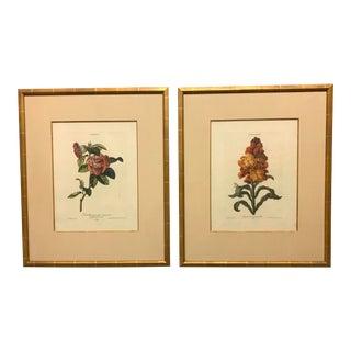 "18th Century Georg Dionysius Ehret ""Camellia I & Cheiranthus II"" Botanical Illustrations - Set of 2 For Sale"