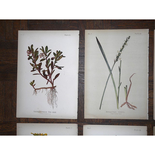 This set of eight (8) authentic antique 19th C. botanical chromolithographs (each color laid in with a separate...