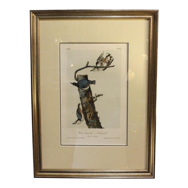 Mid 19th Century Antique John James Audubon Nuthacth Print For Sale
