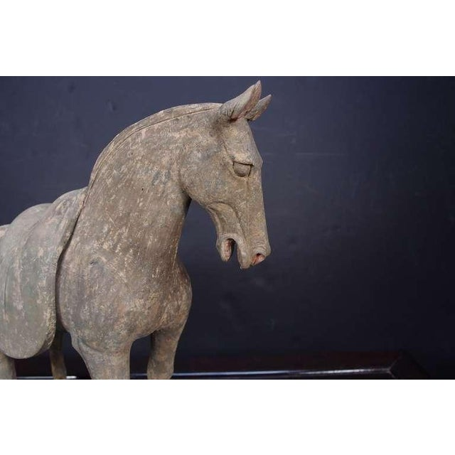 Gray Pair Early Tang Dynasty Grey Pottery Striding Horses with Removable Saddles For Sale - Image 8 of 8