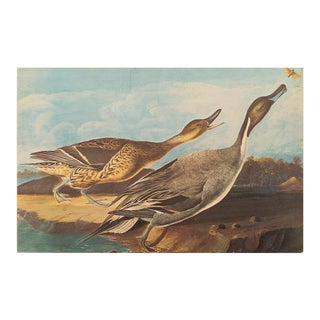 Pin-Tail Ducks and Butterfly by Audubon, XL Vintage Cottage Print For Sale