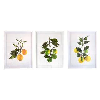 White Lacquer Framed Fruit Prints - Set of 3 For Sale