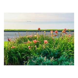 Lillies by the Lake Photograph by Josh Moulton