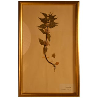 Early 20th Century Framed Herbier For Sale