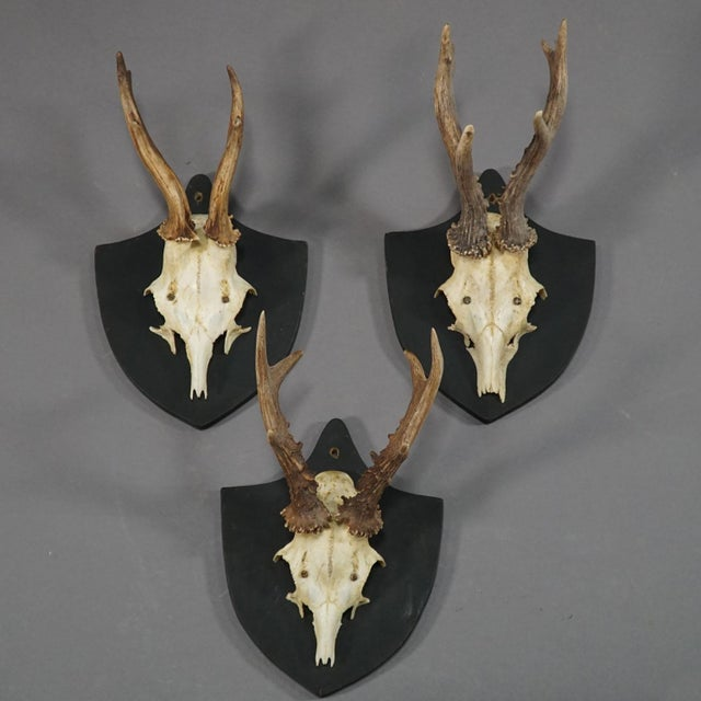 Black Forest Six Large Antique Deer Trophies on Wooden Carved Plaques Ca. 1870 For Sale - Image 3 of 8