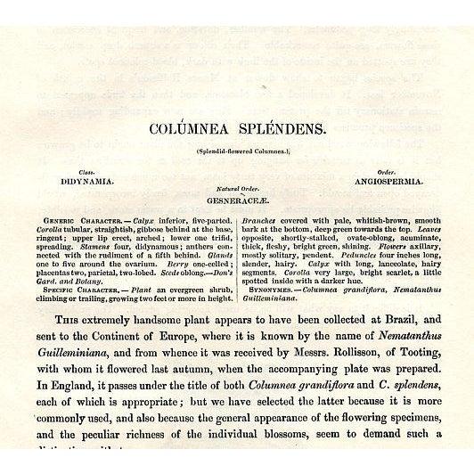 Illustration Splendid-Flowering Columnea, 1843 Botanical Print For Sale - Image 3 of 3