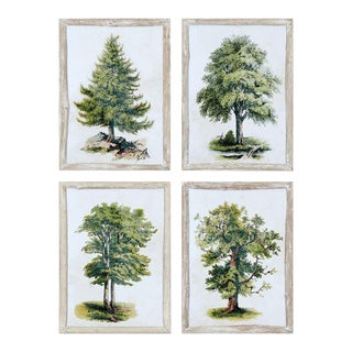Tree Study Prints - Set of 4 from Kenneth Ludwig Chicago For Sale