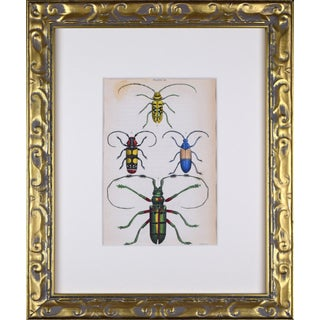 19th Century Hand Colored Entomology Engraving of Beetle Insects For Sale