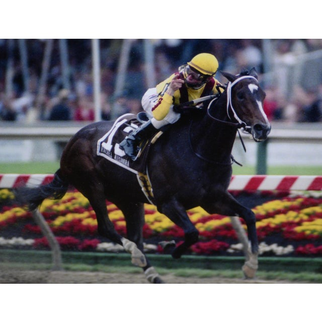 Calvin Borel Three Time Kentucky Derby Winner Signed Racing Memorabilia For Sale - Image 4 of 8