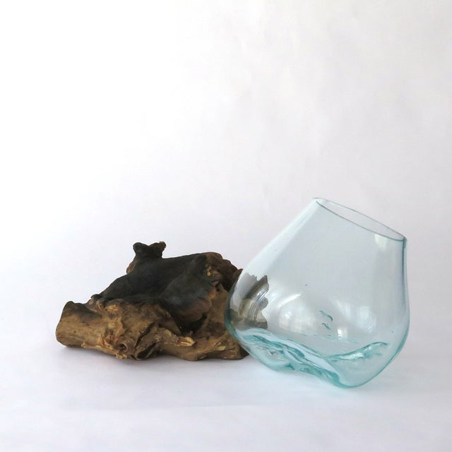 Glass on Teak Driftwood Terrarium - Image 7 of 7