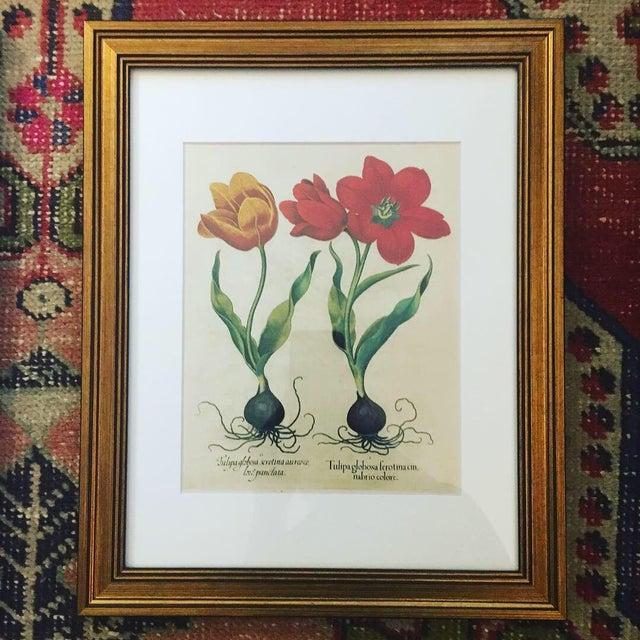 Taschen Taschen Botanical Framed Prints - Set of 3 For Sale - Image 4 of 6