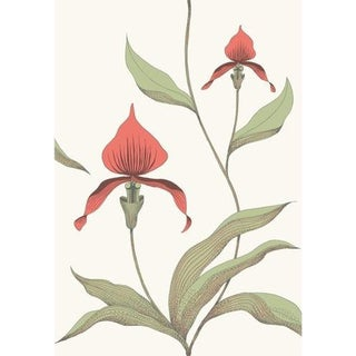 Cole & Son Orchid Wallpaper Roll - Red/White For Sale