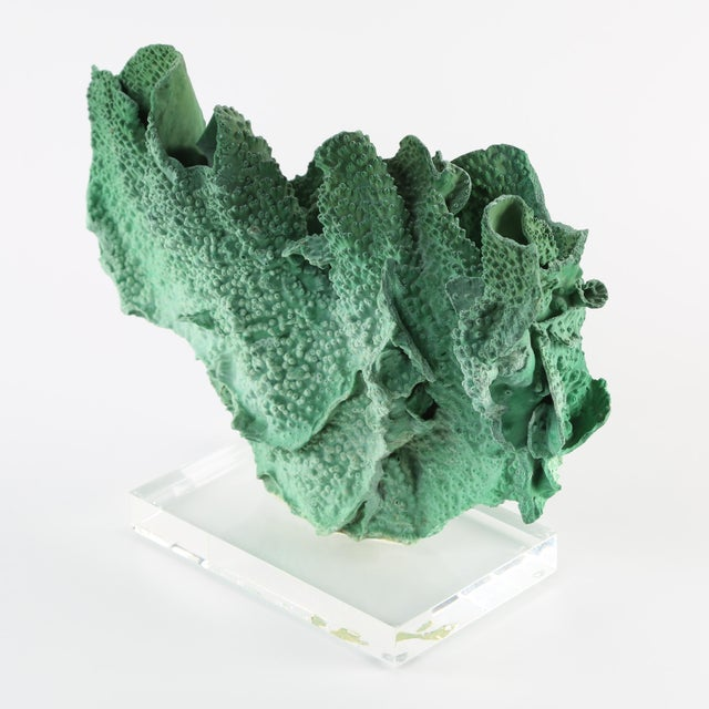 "Beautiful vintage green coral specimen mounted on a lucite base. 15"" w x 5-1/2"" d x 11"" h; base is 8"" w x 5"" d x 1"" h...."