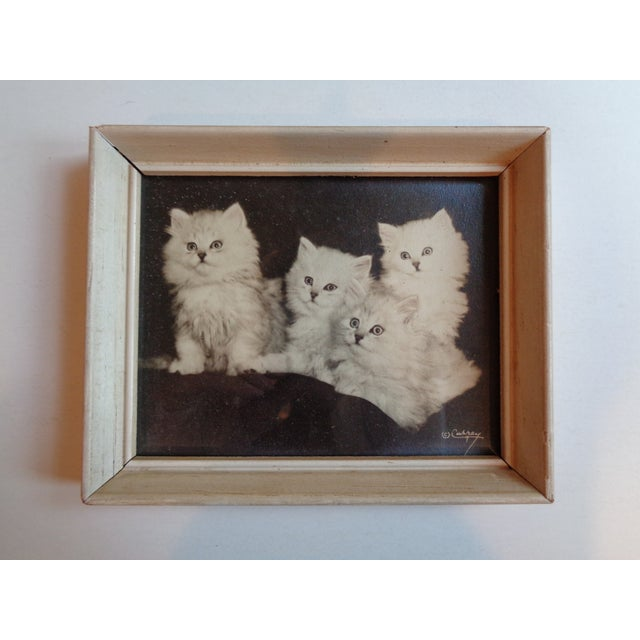 Contemporary Framed Kitten Photographs - a Pair, Artist Bradley Currey For Sale - Image 3 of 6