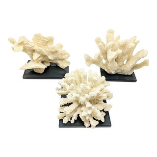 Faux Coral Specimens on Black Glass Base - Set of 3 For Sale