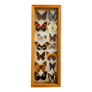Framed Mounted Butterflies #2 For Sale
