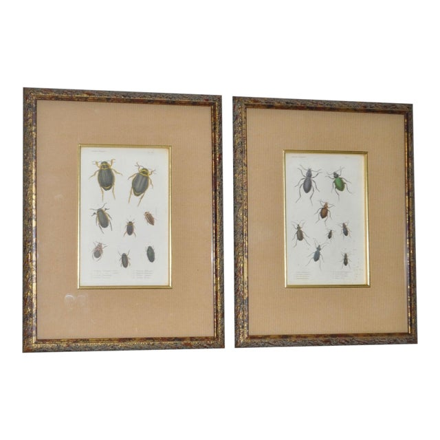 Pair of 19th Century Color Insect Plates For Sale