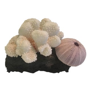 Coral & Sea Urchin on Lava Rock For Sale