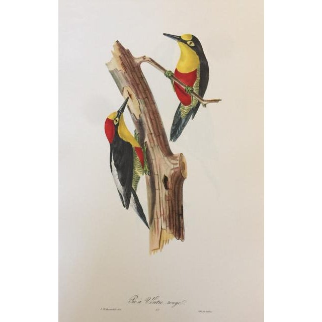 1st Edition Full Color Lithographs of Tropical American Birds - Set of 30 For Sale - Image 9 of 13