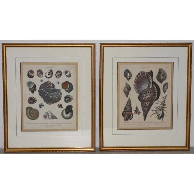 "Aquatint Pair of Early 19th Century ""Conchology"" Color Etchings C.1802 For Sale - Image 7 of 7"