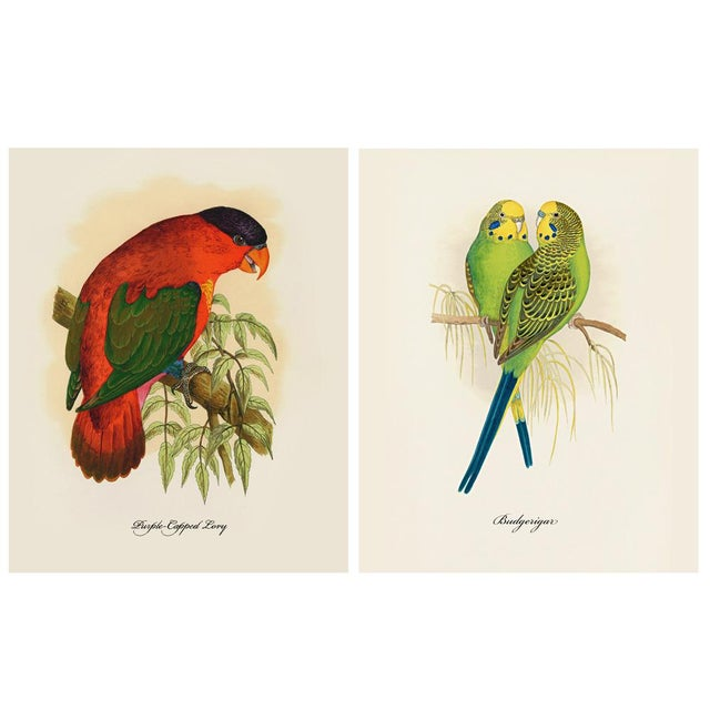 A stunning set of 12 reproduction parrot prints after original Alexander Francis Lydon (1836-1917) lithographs of parrots...