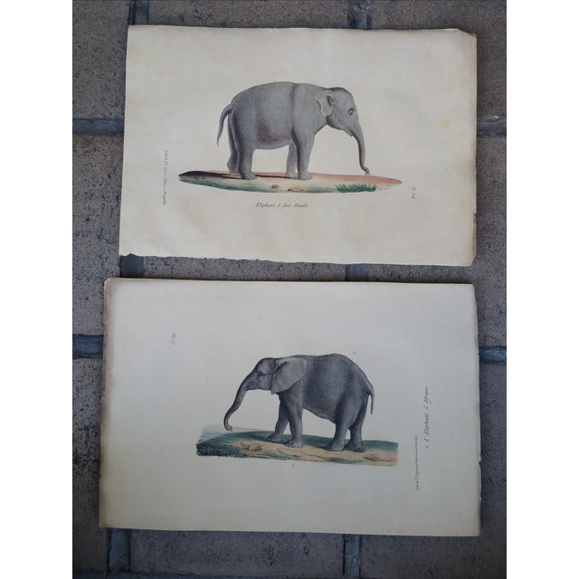 1829 Hand Painted Elephant Engravings - Image 2 of 6