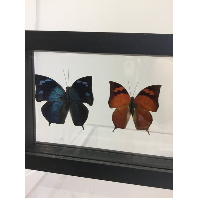 2000s Butterfly Specimen in Shadow Box Frame For Sale - Image 5 of 8