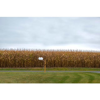 """""""Celebration in the Cornfields (16""""x24"""")"""" Contemporary Photograph by John Manno For Sale"""