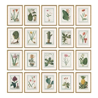 Hortus Romanus 1772-1793 Framed Art Prints - Set of 20 For Sale