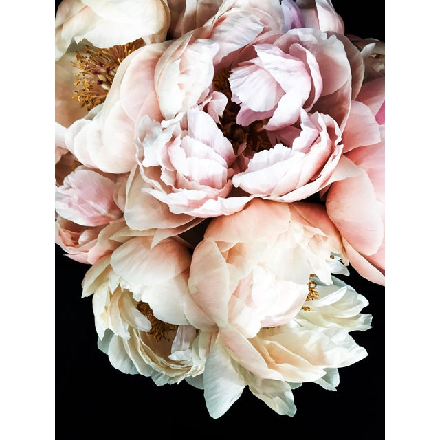 Peony 55 Photographic print by California based photographer Christina Fluegge. Paper print on Hahnemuhle Photo Rag Paper....