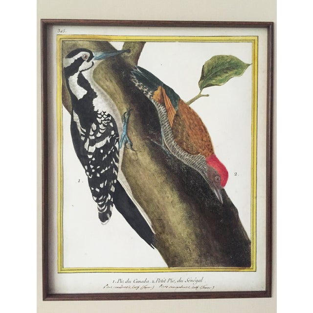 French 18th-C. Martinet Ornithological Engraving For Sale - Image 3 of 6